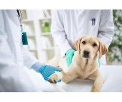 Post Jobs & Hire veterinarians at vetprise.com for free
