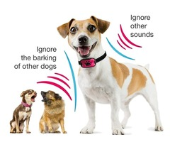 Purchase Best Vibrating Dog Collars Online