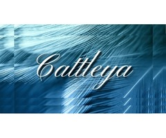Fiction and Fantasy Books | Fiction Writing for Novels – Cattleya Books