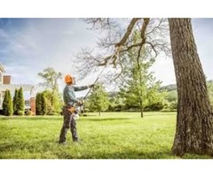 Best Tree Trimming Service