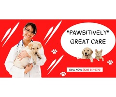Kitto Mobile Pet Care | Expert veterinary and pet care at home | Don't let the quarantine affect you