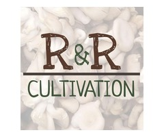 Wild Rice and Wild Mushrooms Recipe | R&R Cultivation | MN Mushrooms