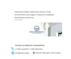 Mold and mildew removal in denver