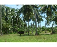 Lot For Sale in Philippines