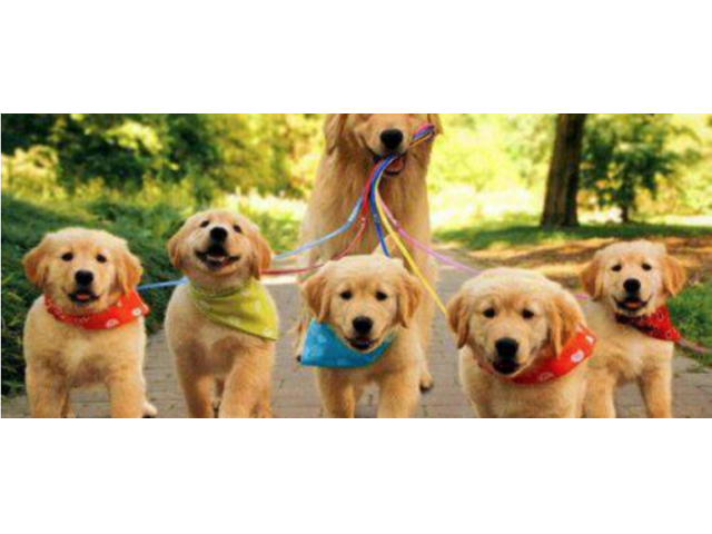 Best Dog Boarding In Pasadena Animals California City
