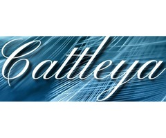 Top Fantasy Writers | Famous Self Published Authors – Cattleya Books
