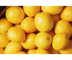 High Quality and Spotless Lemons Available at Reputed Suppliers