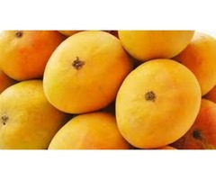 Mango Suppliers Supply the Fruit All Year Round
