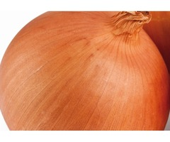 Reputed Onion Suppliers Deal with All Varieties of Onions