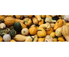 Organic Squash Suppliers in Mexico Deal with Both Summer and Winter Squash
