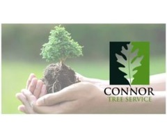 Call Connor Tree Service for Professional Tree Removal