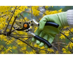 Ever Green Tree Services