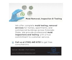 Boulder mold testing and removal services