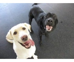 Puppy Day Care Services in Virginia
