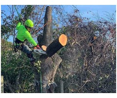 ISA-Certified Tree Service In Mt Pleasant SC – Connor Tree Service