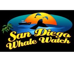 Whale watching experience in San Diego