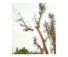 Tree Removal in Sacramento