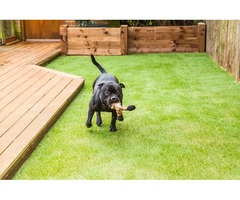 Looking for Artificial Grass for Pets?