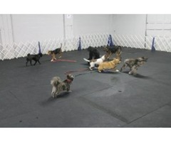 Puppy Kindergarten Training Services in Albany NY