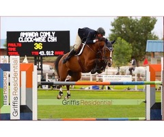 Find Best Hunter Jumpers for Sale at Comly Sports Horse