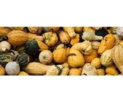 Squash Suppliers: A Reliable Source for Purchasing High Quality Squash Varieties