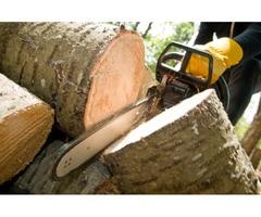 Stump Grinding Service Ensures Better Landscaping Charleston