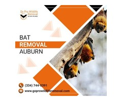 Get good services of Bat removal Auburn by Go Pro Wildlife Removal