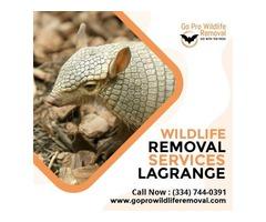 Get Wildlife Removal Services LaGrange