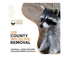 Get Best Services of Lee County wildlife removal