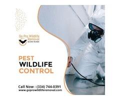 Get Best Services of pest wildlife control