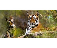 Golden Triangle with Wildlife Tour Packages - India World Wide Travel