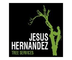 Jesus Hernandez Tree Service