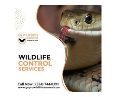 Get good services of Wildlife Control Services by Go Pro Wildlife Removal