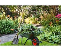 Hire the Best Arborist in Arlington