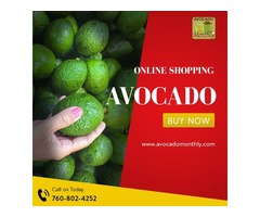 Best Quality Avocado - Good for Your Fitness
