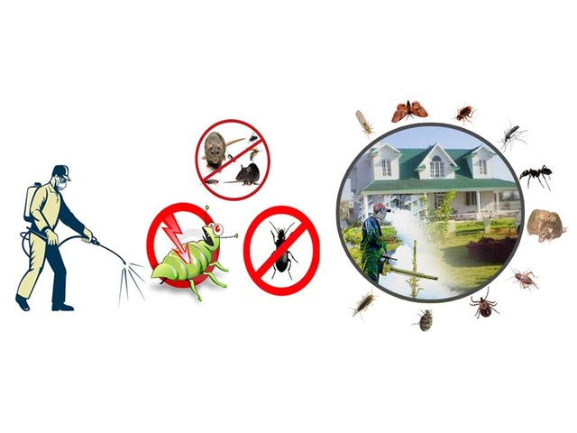Best Residential Pest Control Service in Colorado Springs | free-classifieds-usa.com