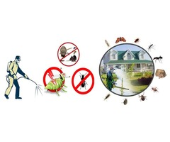 Best Residential Pest Control Service in Colorado Springs