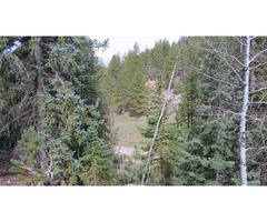 Lot features meadow & aspen, pine trees! 37 Spruce Drive