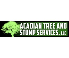 Tree Removal In Picayune | Tree and Stump services
