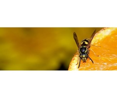 Professional Wasps control Service in Western Massachusetts