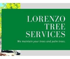 Lorenzo Tree Service