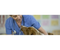 Availability Jobs for Hospital Managers with Vetprise.com