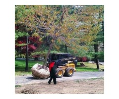 Large Tree Transplants Services in Rockland NY