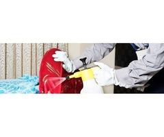 Best Pest Control Service in Colorado Springs | free-classifieds-usa.com