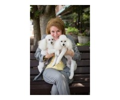 Pet Spa & Dog Grooming Services in McLean VA