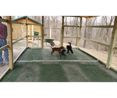 Dog Boarding Services in Columbus Ohio