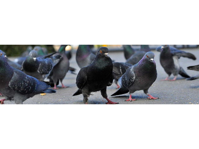 Reliable Nuisance Bird Control Service in Colorado Springs | free-classifieds-usa.com