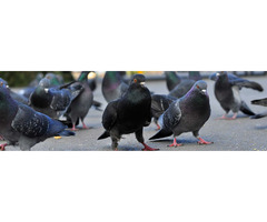 Reliable Nuisance Bird Control Service in Colorado Springs