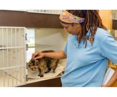 Pet Surgery Services in McLean VA