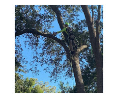 ISA Certified Tree Service in Charleston Via Connor Tree Service